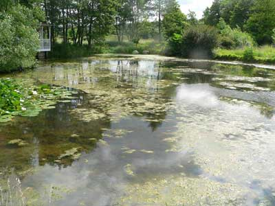 Lake before treatment with PondTec ultrasonic algae control