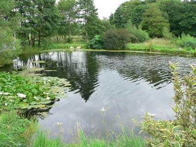 Lake after 4 weeks treatment with PondTec ultrasonic algae control